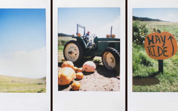 Kohala Mountain Farm Pumpkin Patch